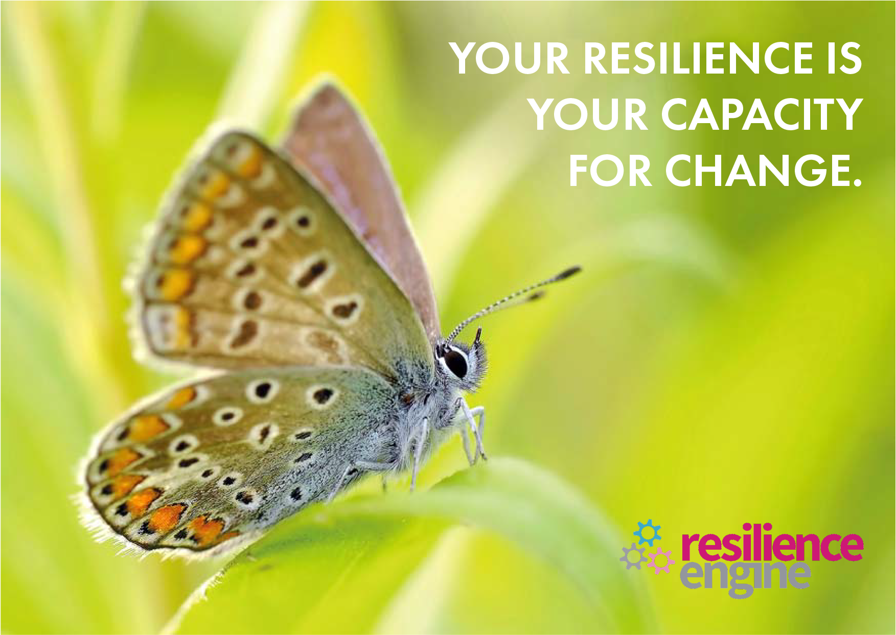 Butterfly, resilience quote, resilience engine quote, wellbeing quote
